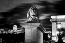Chain Bridge's guardian lion and Buda Castle